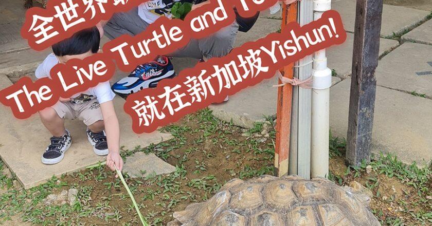 走,去全世界最多活龟鳖的博物馆